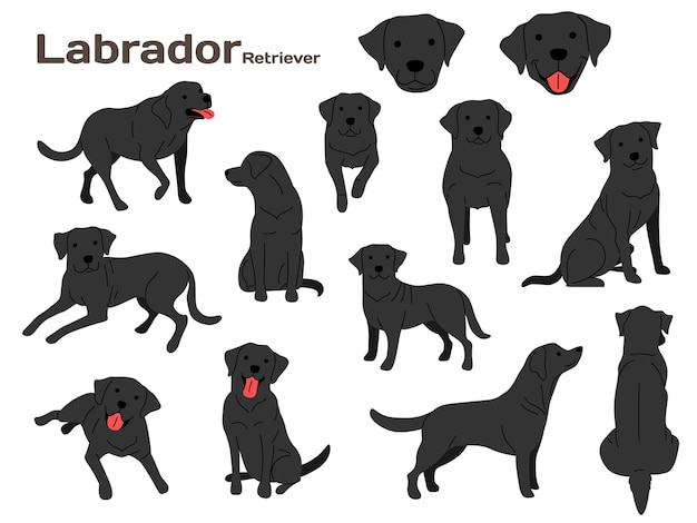 Labrador illustration