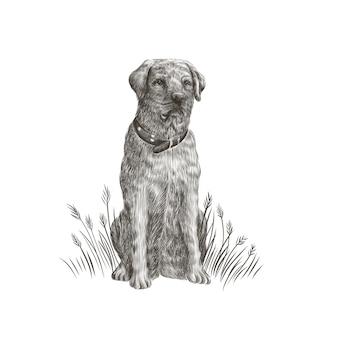 Лабрадор ретривер крупным планом черно-белый портрет собаки. иллюстрация домашнего животного.