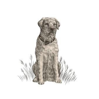 ラブラドールレトリバーのクローズアップカラフルな犬の肖像画。
