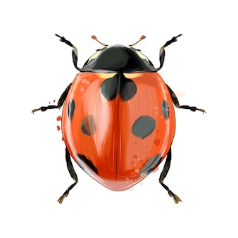 Ladybug from splash of watercolors colored drawing realistic vector illustration of paints