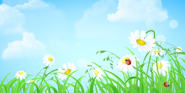 Ladybug on сhamomile flower fresh green grass lawn with cloudy blue skies. nature floral spring summer background copyspace  illustration