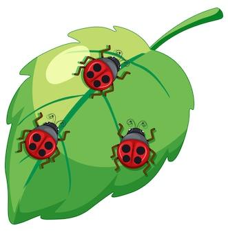 てんとう虫、葉の上の女性bettle昆虫
