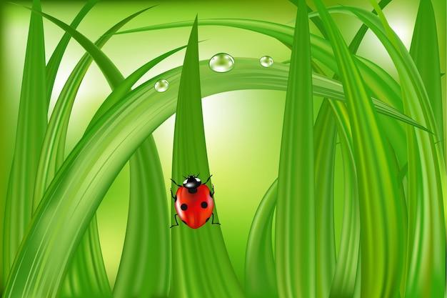Божья коровка на лезвии зеленой травы