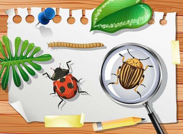 Coccinella con scarabeo della patata del colorado e lente di ingrandimento sul tavolo si chiuda
