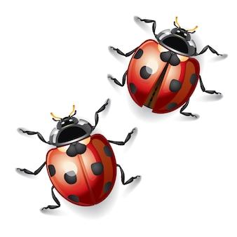 Ladybugs illustration.