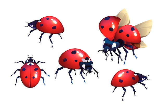 Ladybugs with red and black spots