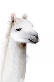 Лама акварельные иллюстрации