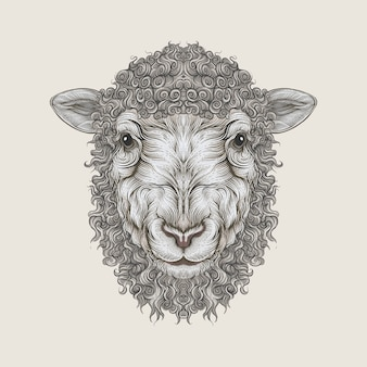 Lamb head in hand drawing