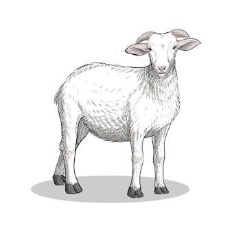 ヴィンテージ手描きスタイルの子羊