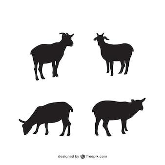 Lamb silhouettes