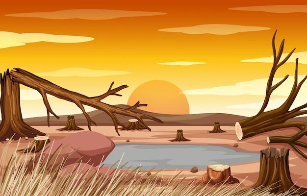 Landscape with deforestation at sunset