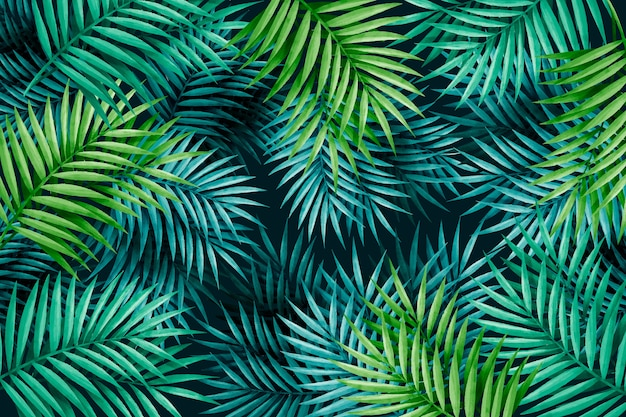 Large exotic green leaves background