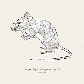 The large japanese field mouse