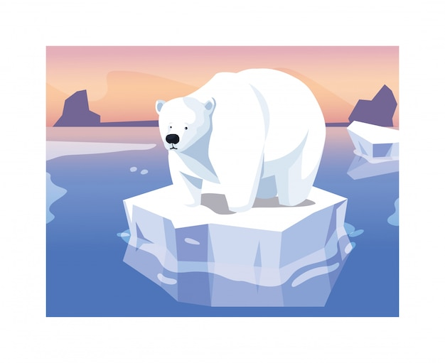 Large polar bear on an ice floe drifting