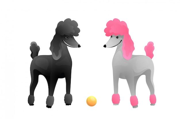 Большой пудель щенков породистый питомец мультяшный. уход за ветеринарами и выставкой собак векторные иллюстрации.