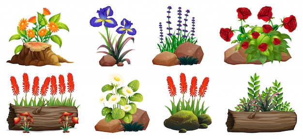 Large set of colorful flowers on rocks and wood isolated
