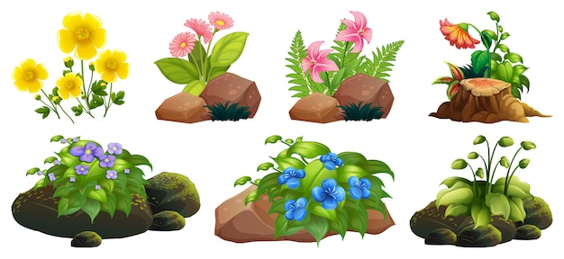 Large set of colorful flowers on rocks and wood