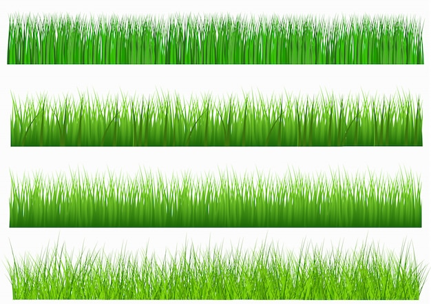 Large set of fresh green grass in lengths and densities for use as design elements isolated on white background