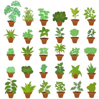 Large set of houseplants in pots.