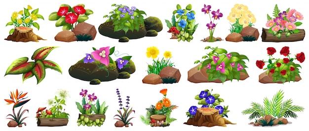Большой набор красочных цветов на скалах и дереве