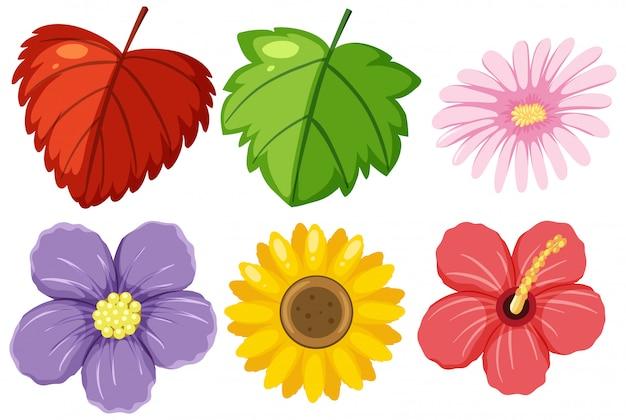 Большой набор цветов и листьев
