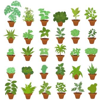 Большой набор комнатных растений в горшках.