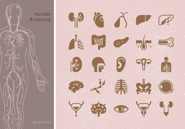 Большой набор линейных иконок внутренних органов человека с подписями. подходит для печати, интернета и презентаций.