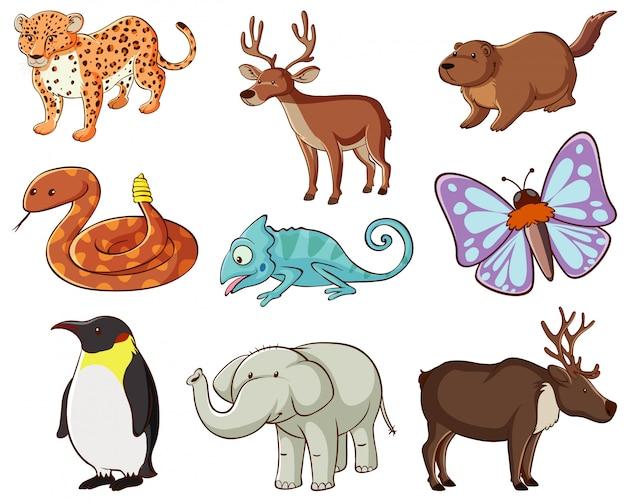 多くの種類の動物がいる野生生物の大規模なセット