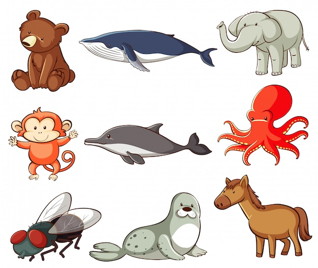 Large set of wildlife with many types of animals