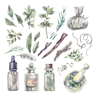 ハーブ、医療ボトル、オイルの大規模な水彩セット。有機薬用植物と貯蔵器具の手描きイラスト。健康とセルフケア