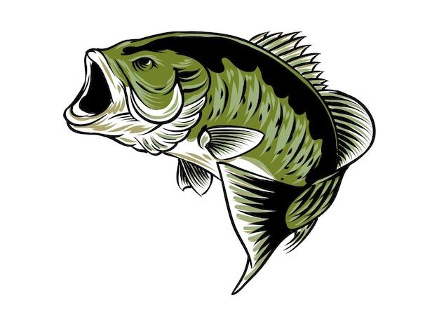 Рыба большеротый окунь, изолированные на белом фоне