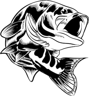 Largermouth bass fish black and white illustration hand drawing