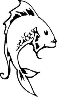 Lateral catfish