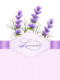 Lavandula flowers. lavender flowers on background with elegant handwritten calligraphy.