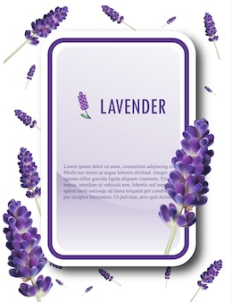 Lavender banner template. lavender vector illustration.