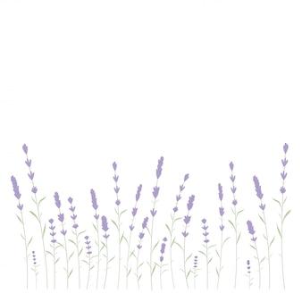 Lavender card border vector. vintage label with lavender fragrance.