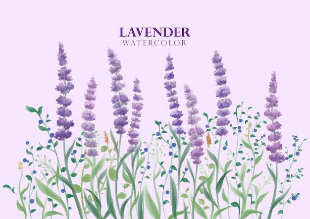 Lavender flower in watercolor