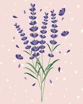 Lavender flowers bouquet illustration