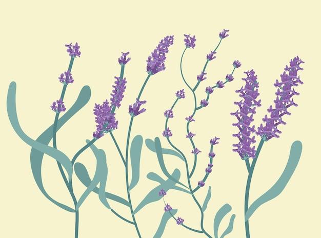 Цветочный сад лаванды