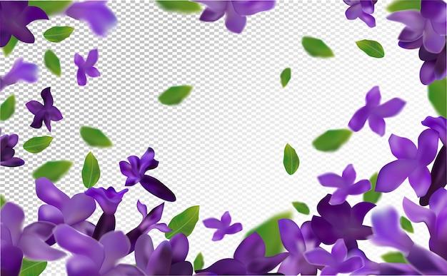 ラベンダー空間。透明な空間に緑の葉と美しいラベンダー。紫の花のラベンダーが動きます。