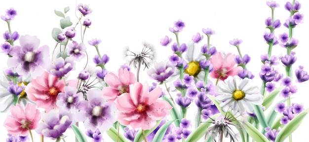 Lavender and summer colorful flowers in watercolor
