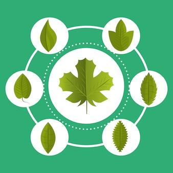 잎과 나뭇잎 생태 그래픽