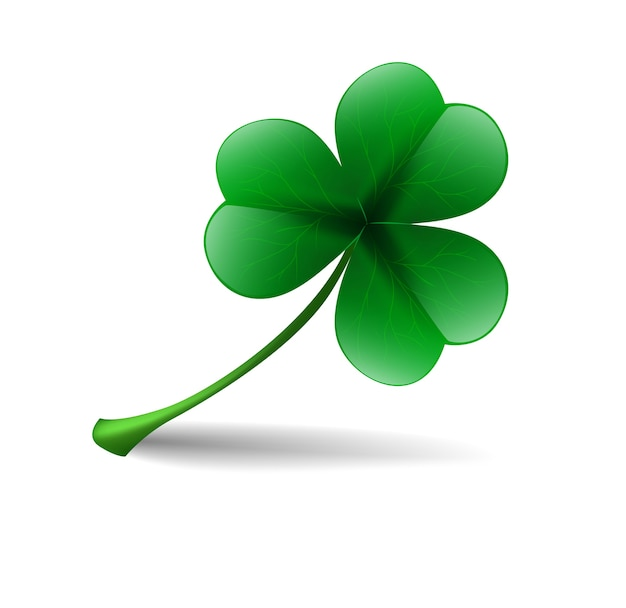 Leaf lucky clover isolated on white background