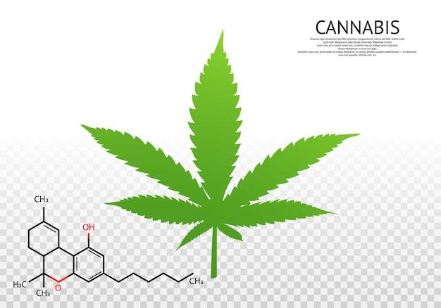 대마초 식물의 잎입니다. 마리화나 잎. 의료용 대마초. 벡터 로고