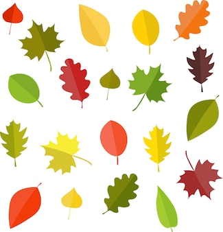 Leafs.autumn 세트