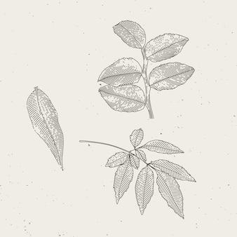 하나의 잎