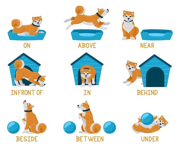 Изучение английских предлогов с милым мультяшным щенком. милая собака акита выше, позади, под, рядом с собачьей кроватью или собачьей будкой. изучение предлогов английского языка