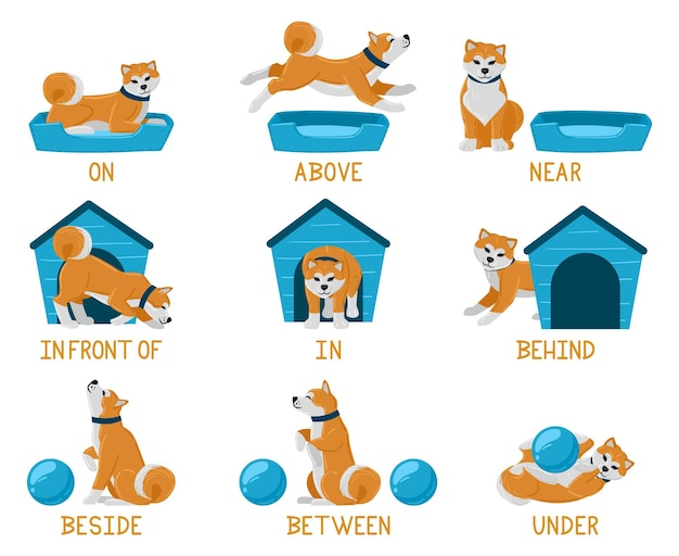 Learning english prepositions with cute cartoon puppy dog. cute akita dog above, behind, under, near dog bed or dog house illustration set. english prepositions learning