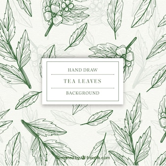 Leaves background to prepare tea