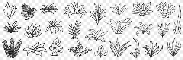 잎 도로 자연 패턴 낙서 세트에 움 큼 프리미엄 벡터